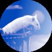 IDEXX Animal Health Monitoring
